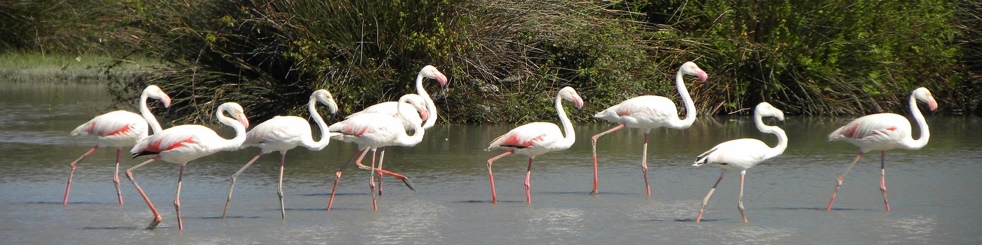 imagenes anfibios imagenes aves imagenes invertebrados imagenes