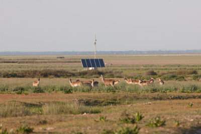 Doñana Biological Station (EBD) will improve energy efficiency and the e-labs of the ICTS-Doñana Biological Reserve (RBD)