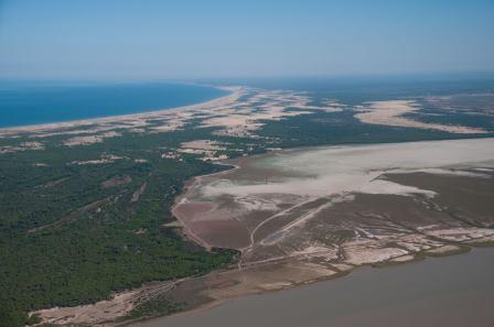 Doñana aerial surveys