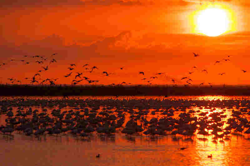 International Waterbird Census during winter (January) in Doñana Natural Space